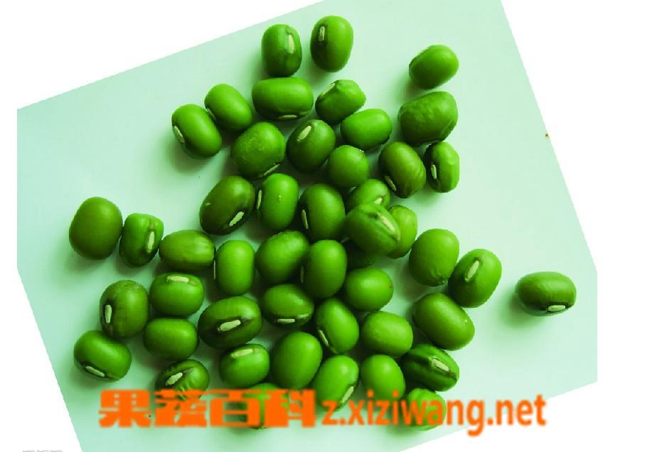 果蔬百科绿豆和黄瓜能一起吃
